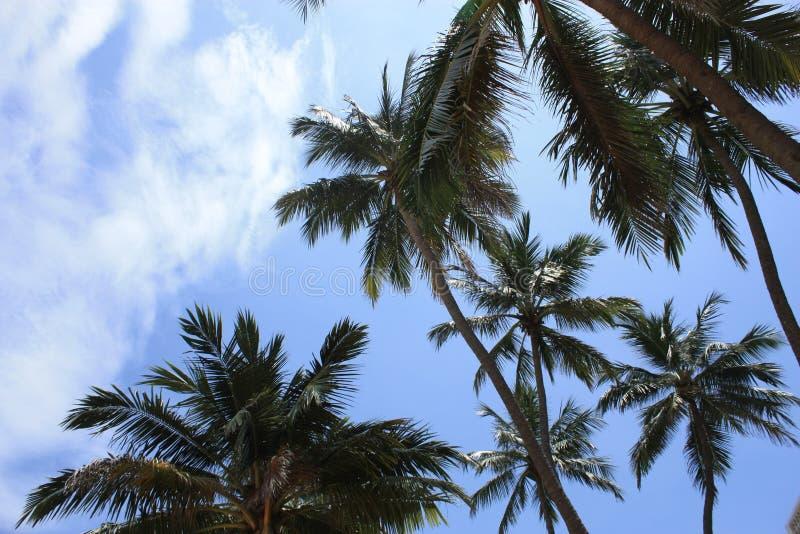 Niebo z drzewkami palmowymi fotografia royalty free