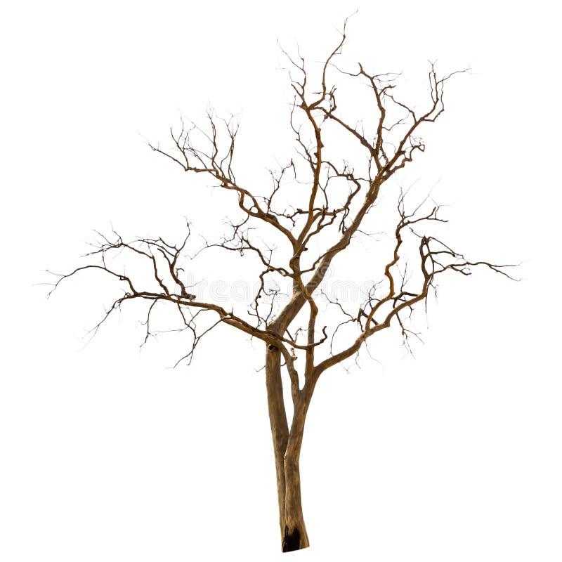 Nieboszczyk i suchy drzewo zdjęcie royalty free
