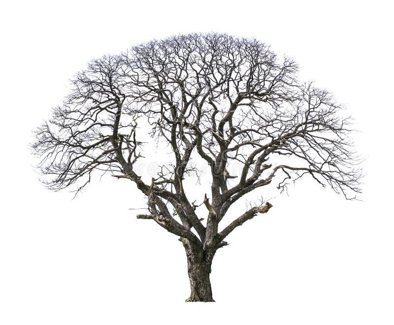 Nieboszczyk i suchy drzewo fotografia royalty free