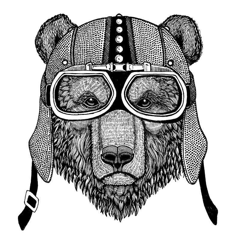 Niedźwiedzia brunatnego dzikie zwierzę jest ubranym motocykl, aero hełm Rowerzysta ilustracja dla koszulki, plakaty, druki royalty ilustracja
