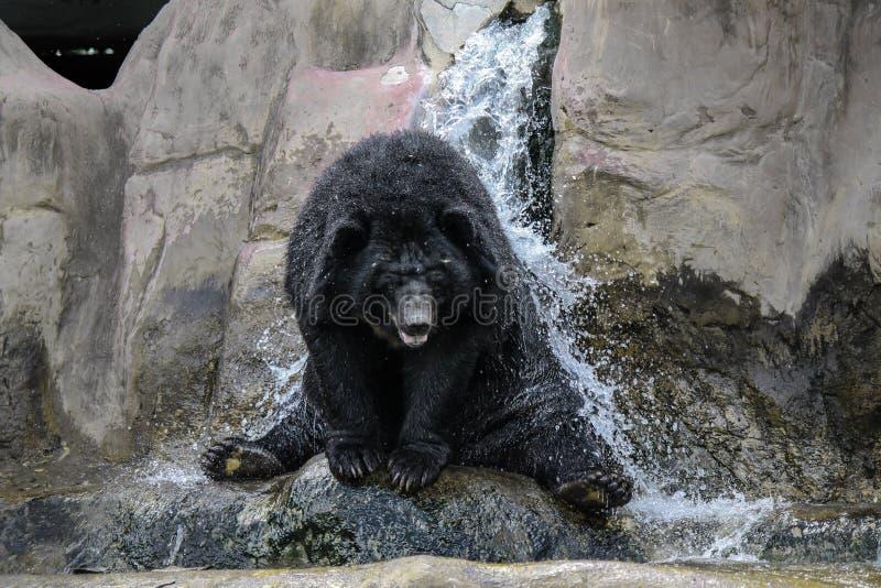 Niedźwiadkowa prysznic fotografia royalty free