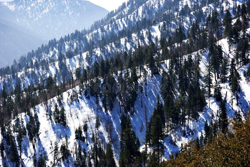niedźwiadkowe duże góry zdjęcie royalty free