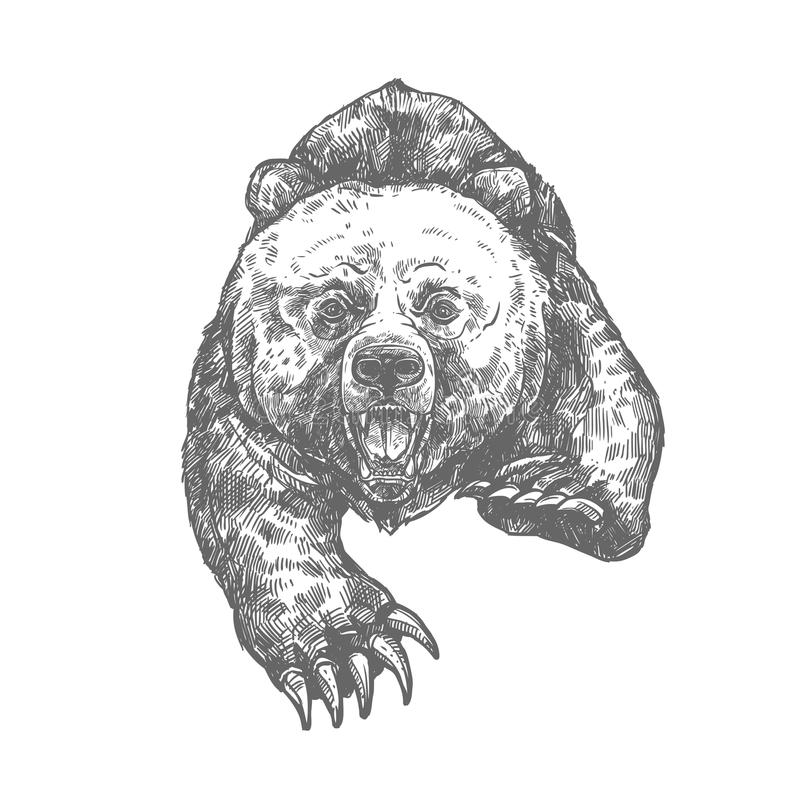 Niedźwiadkowy atak odizolowywający nakreślenie agresywny zwierzę royalty ilustracja
