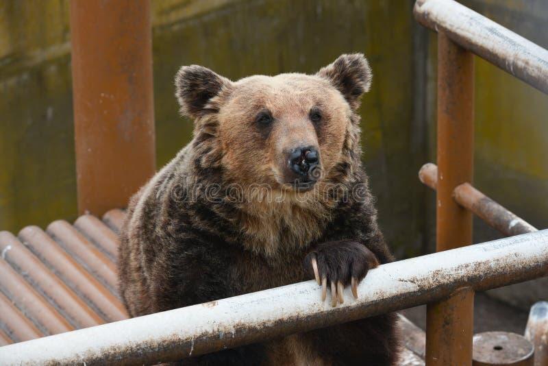 Niedźwiadkowy czekanie dla niektóre jedzenia zdjęcia stock