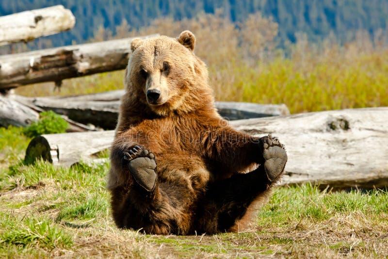 niedźwiadkowy figlarnie fotografia royalty free