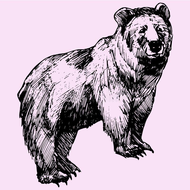 Niedźwiedź ilustracja wektor