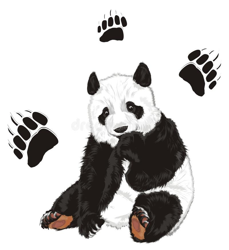 Niedźwiedź i odciski stopy ilustracja wektor