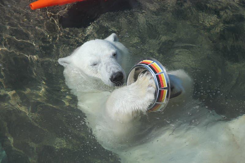 Niedźwiedź Nika w Moskwa czyści puchar z flaga Niemcy w Moskwa zdjęcie royalty free