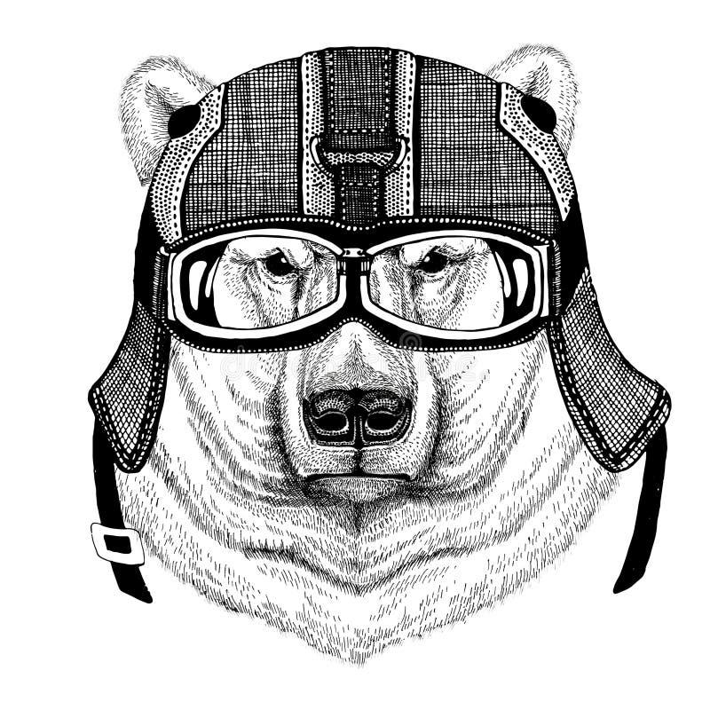Niedźwiedź polarny jest ubranym motocyklu hełm, lotnika hełma ilustracja dla koszulki, łata, logo, odznaka, emblemat, logotyp obrazy royalty free