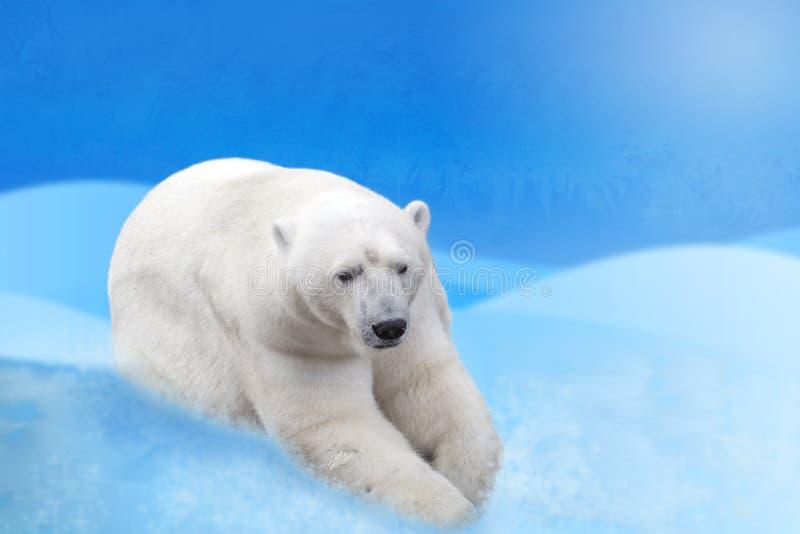 Niedźwiedź polarny na śnieżnym tło kolażu fotografia stock