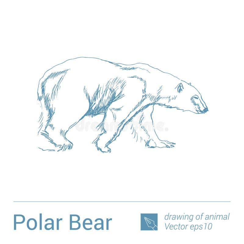 Niedźwiedź polarny, rysować zwierzęta, vectore ilustracja wektor