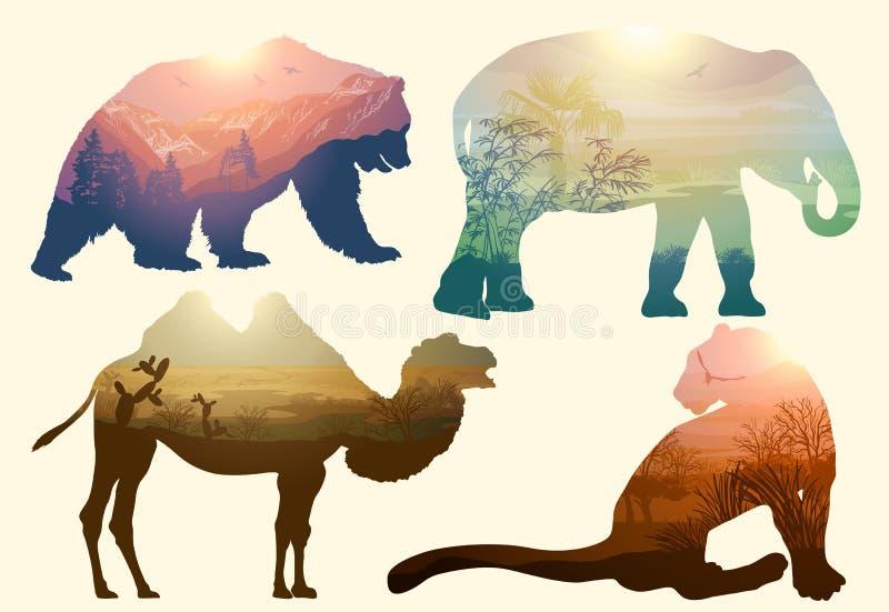 Niedźwiedź, słoń, wielbłąd i lampart, przyroda ilustracja wektor