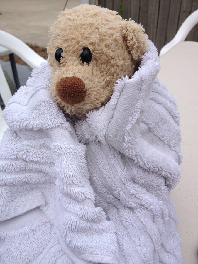 Niedźwiedź W ręczniku fotografia royalty free