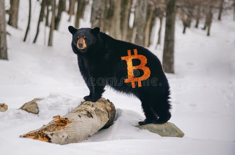 Niedźwiedź z Bitcoin logem na futerku fotografia stock