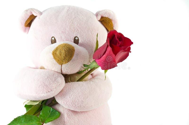 Niedźwiedź z czerwieni różą obraz stock