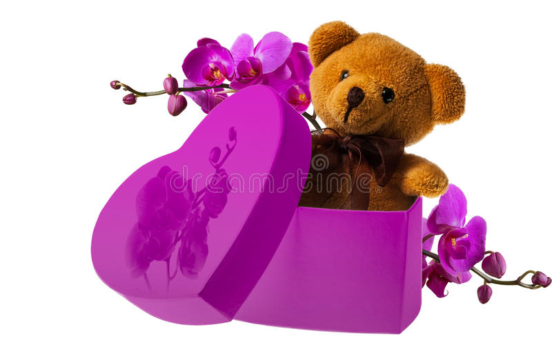 Niedźwiedź z orchideą w serca pudełku fotografia stock