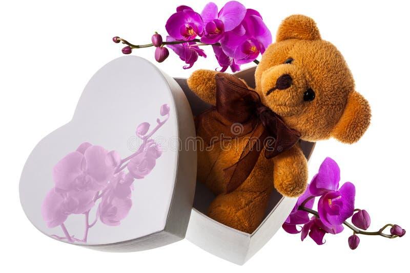 Niedźwiedź z orchideą w serca pudełku fotografia royalty free