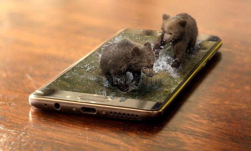 Niedźwiedzi brunatnych lisiątka na telefonie komórkowym obraz stock