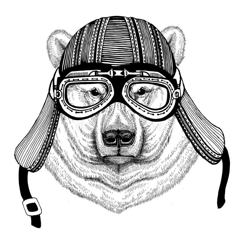 Niedźwiedzia polarnego ręka rysujący wizerunek zwierzęcy jest ubranym motocyklu hełm dla koszulki, tatuaż, emblemat, odznaka, log obraz royalty free