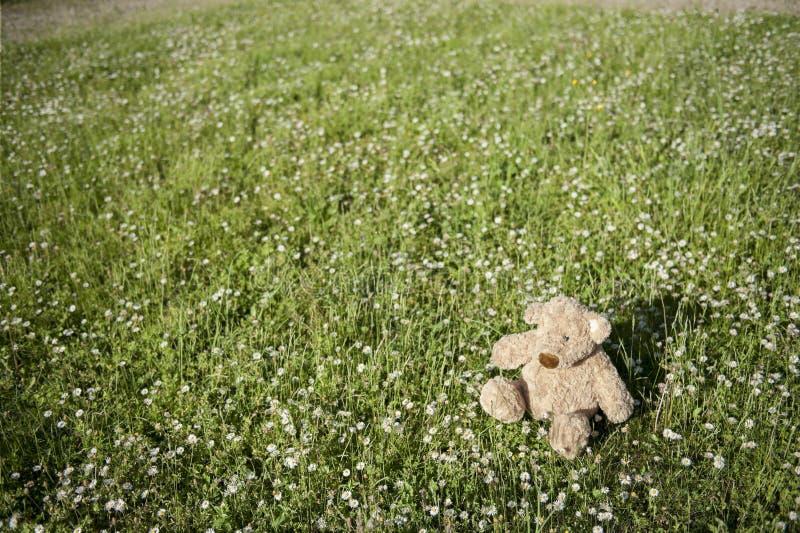 niedźwiedzia przegrany outdoors miś pluszowy zdjęcia stock