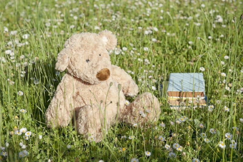 niedźwiedzia przegrany outdoors miś pluszowy fotografia stock