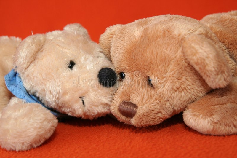 niedźwiedzie 8 teddy obrazy stock
