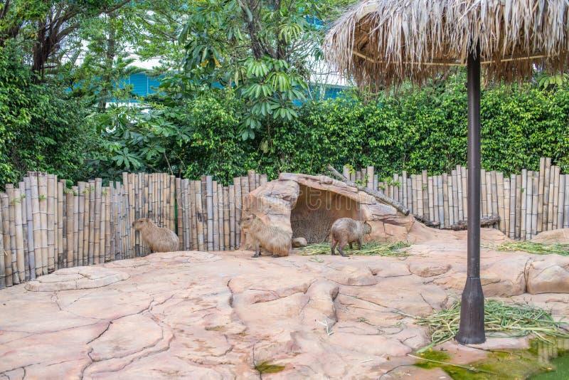 Niedźwiedzie przy Chimelong oceanu królestwa kurortem w Zhuhai, Chiny zdjęcia stock