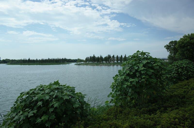 niedaleko jeziora obrazy stock