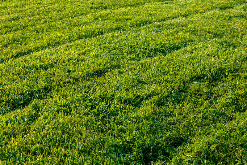 Niedawno skoszony trawa gazon z opon przekątnami zdjęcie royalty free