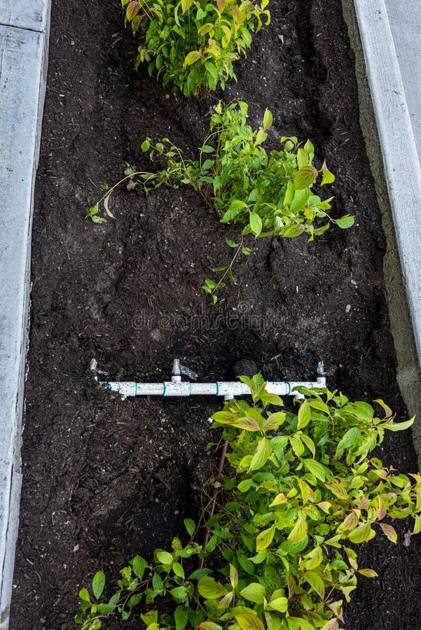 Niedawno uprawiana dośrodkowa między nowym chodniczkiem, krawężnikiem, świeżymi rośliny i brud i, i pvc irygacji włączniki i drym zdjęcia royalty free