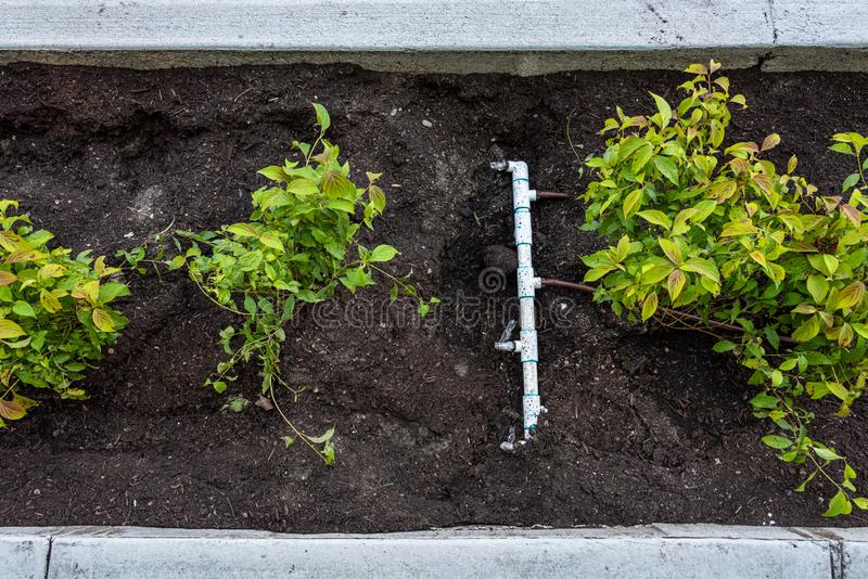 Niedawno uprawiana dośrodkowa między nowym chodniczkiem, krawężnikiem, świeżymi rośliny i brud i, i pvc irygacji włączniki i drym obrazy royalty free