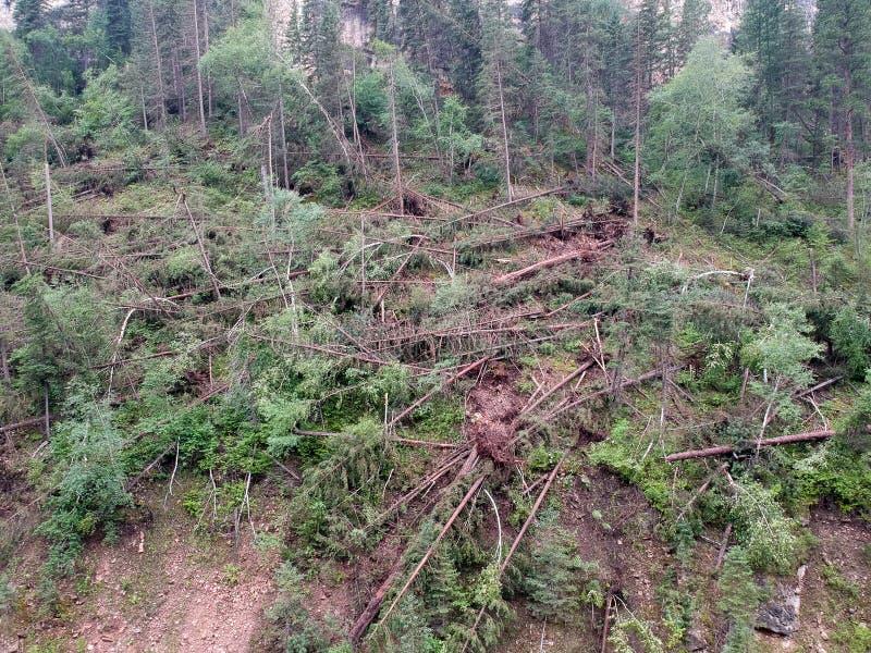 Niedergeworfene Bäume in der Spearfishschlucht nach Tornado landet im Waldbrummenfoto stockbilder