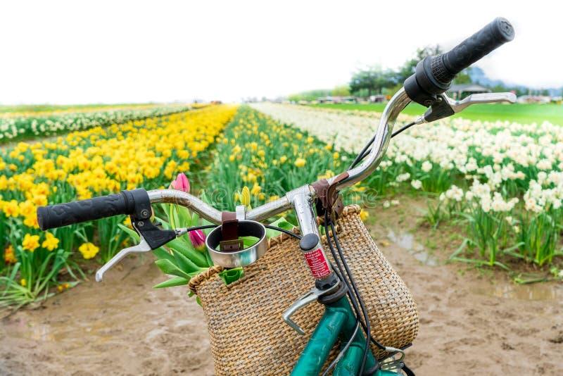 Niederländische Fahrrad fiets Lenkstangen, die vorwärts zu einem Tulpenfeld, mit einem Fahrradkorb von Blumen gegenüberstellen Fr stockbilder