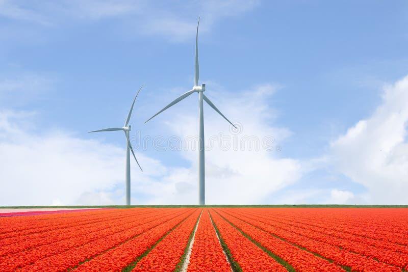 Niederländische Landschaft mit Tulpen und Windkraftanlagen stockfotos