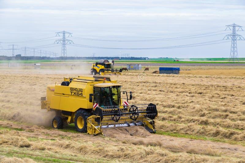 Niederländische Landwirte mit der landwirtschaftlichen Maschinerie, die ein Weizenfeld erntet lizenzfreie stockfotografie