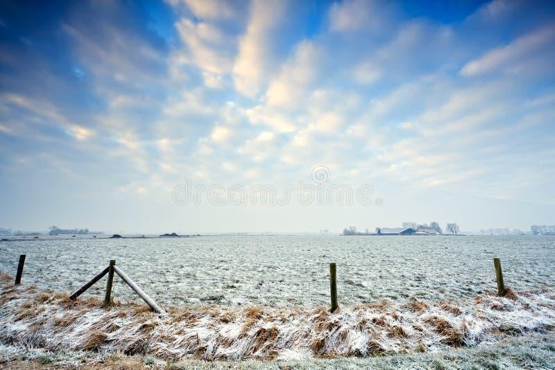 Niederländische Weide im Winter stockfotos