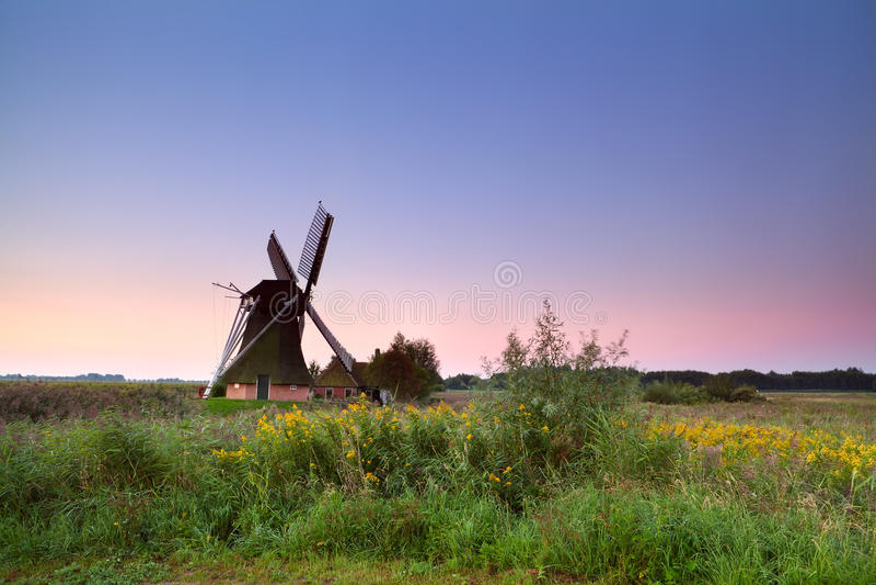 Niederländische Windmühle auf blühender Wiese bei Sonnenaufgang stockbilder
