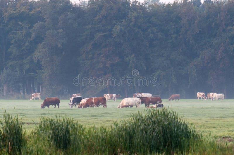 Niederländischer Landschaftsmorgens Nebel stockbild