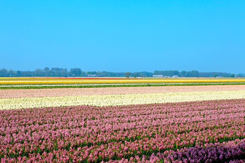Niederländisches Birnenfeld lizenzfreie stockfotos