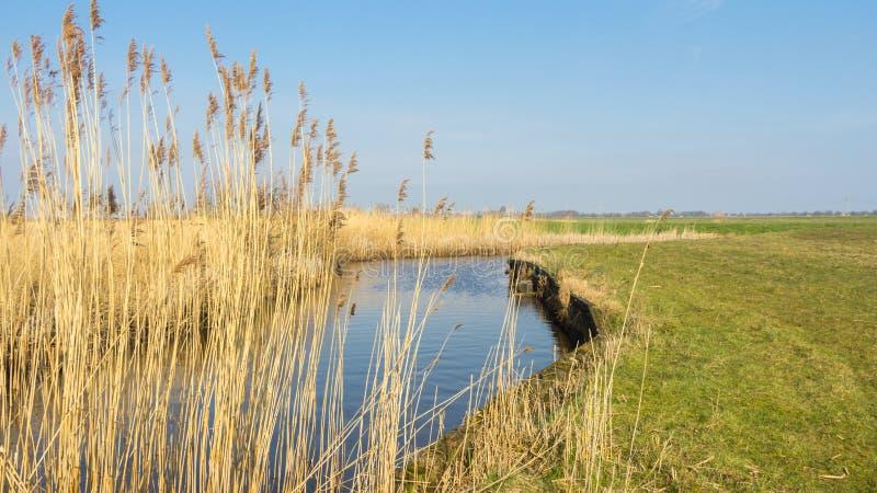 Niederländisches waterlandscape mit Schilf entlang dem Wasser lizenzfreie stockfotografie