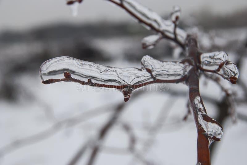 Niederlassung der Anlage im Eis Landschaft des verschneiten Winters lizenzfreie stockfotos