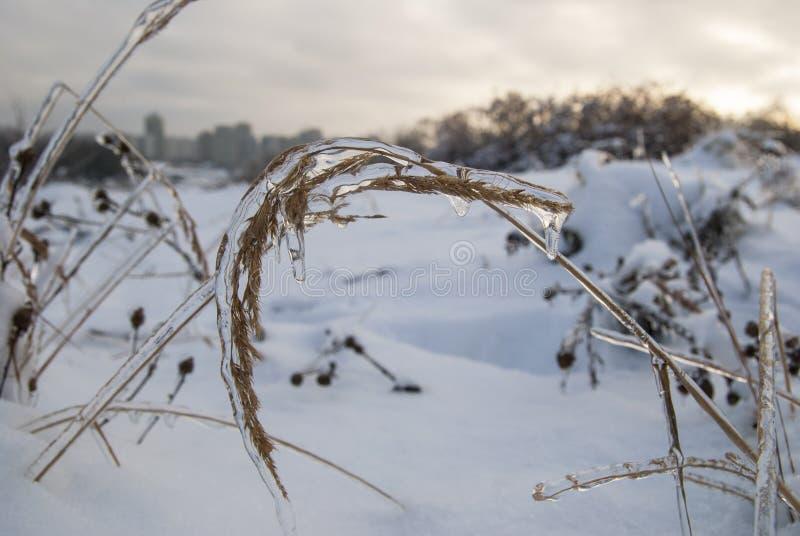 Niederlassung der Anlage im Eis Landschaft des verschneiten Winters lizenzfreies stockbild