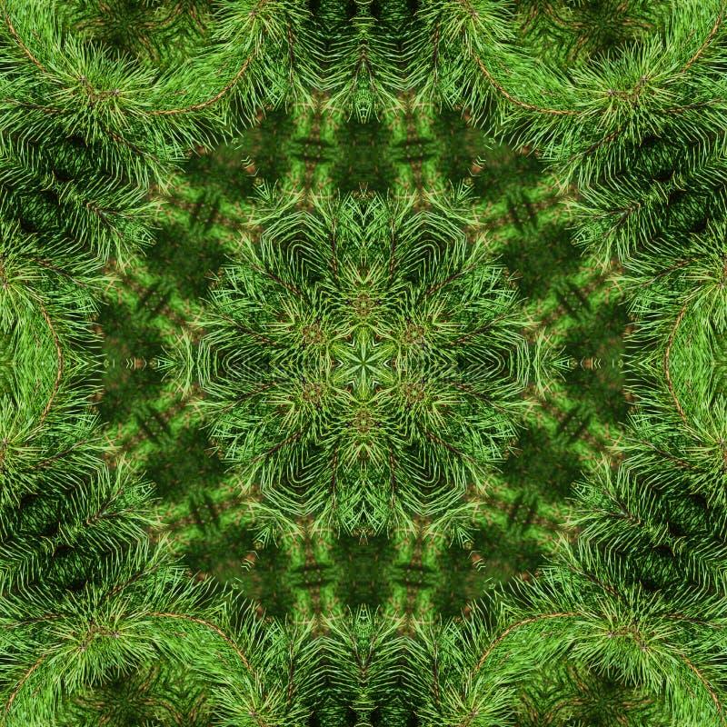 Niederlassung der grünen flaumigen Kiefer stockfotografie