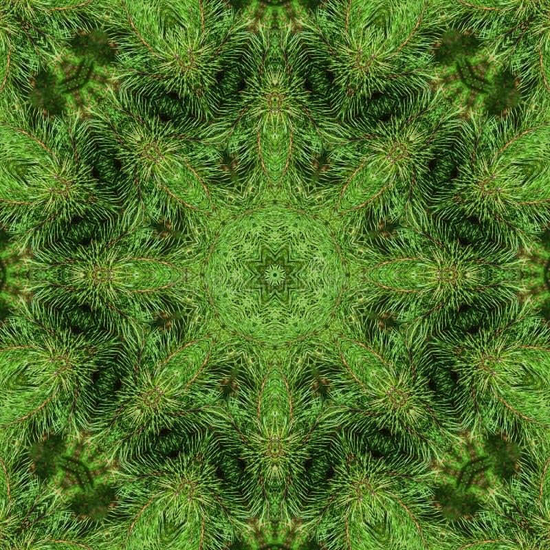 Niederlassung der grünen flaumigen Kiefer stockbilder
