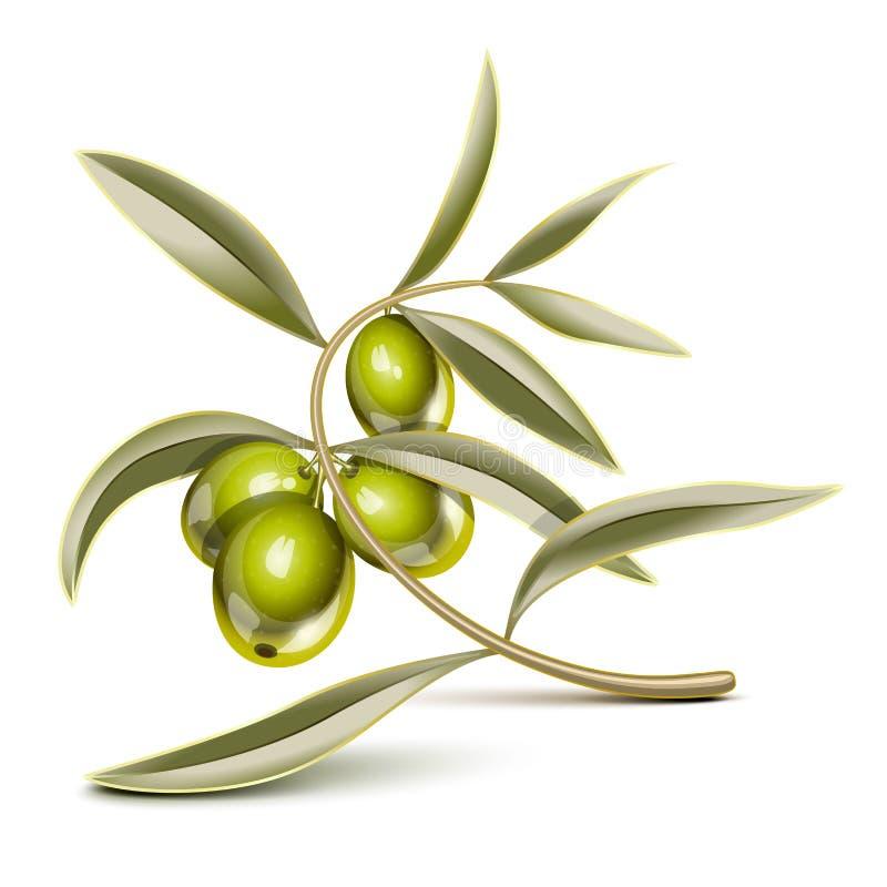 Niederlassung der grünen Oliven stock abbildung