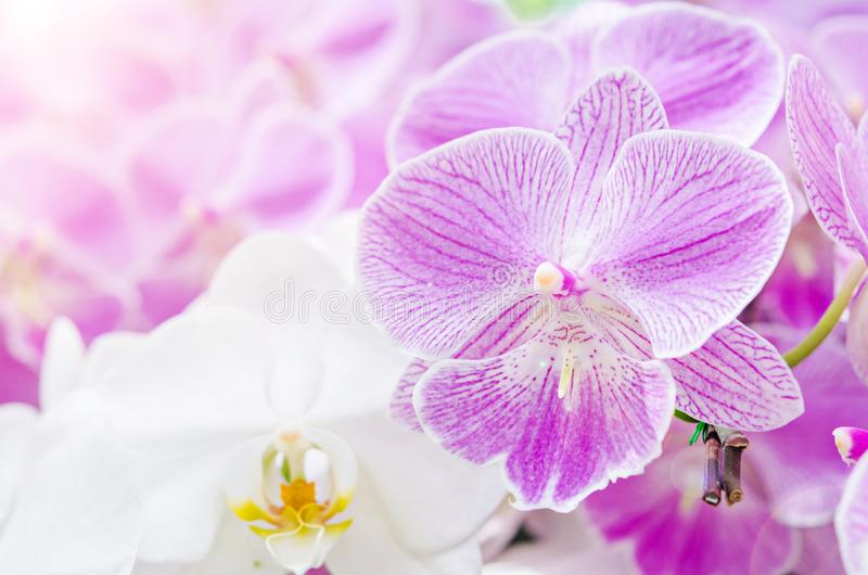 Niederlassung des blühenden rosa Orchideenabschlusses oben lizenzfreie stockfotos