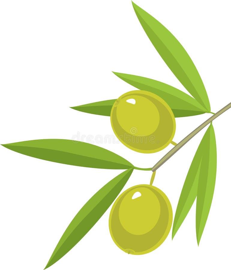 Niederlassung des Olivenbaums mit Grünblättern und -oliven auf weißem Hintergrund lizenzfreie abbildung