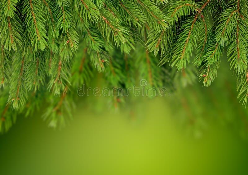 Niederlassung des Weihnachtsbaumhintergrundes lizenzfreie stockbilder