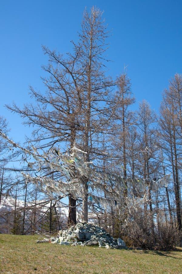 Niederlassung eines Baums stockfotos