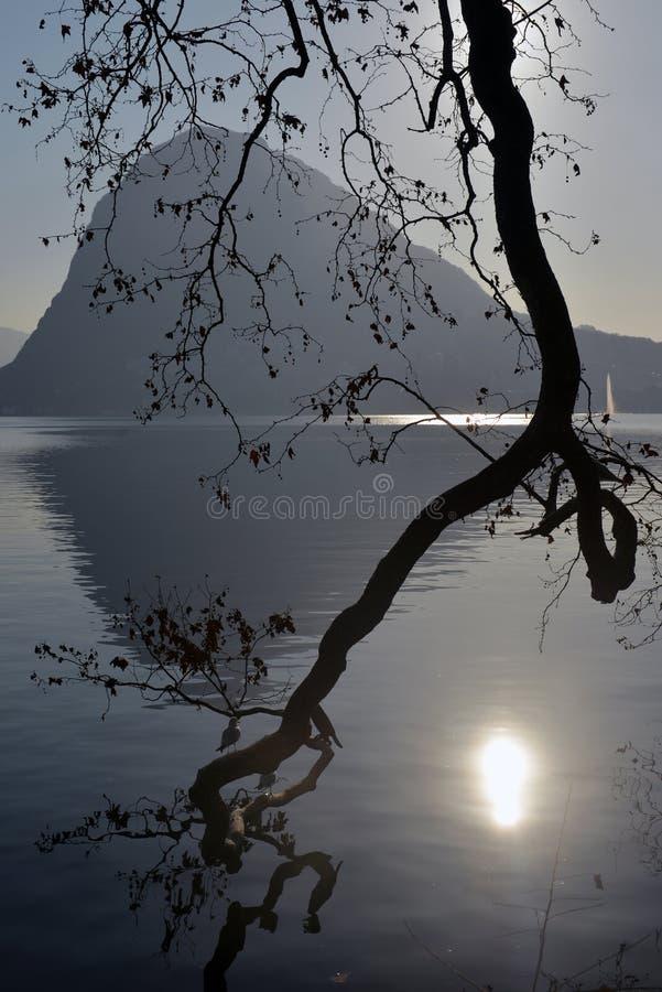 Niederlassung eines Baums, der über dem Wasser hängt stockfoto